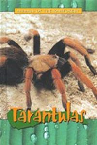 eBook Tarantulas (Animals of the Rainforest) ePub
