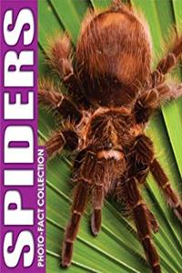 eBook Spiders Photo Fact Collection ePub